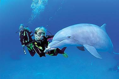Diving With Dolphins at Underwater Explorers Society