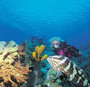 Diving With Grouper at Underwater Explorers Society
