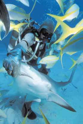 Feed Sharks at Underwater Explorers Society